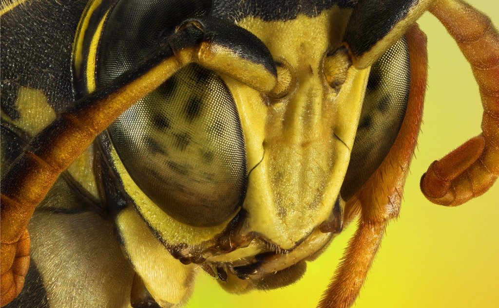 Insects vs. Arthropods: What Is the Difference?
