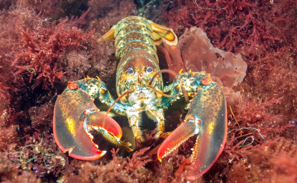 Are Shrimps or Lobsters Insects?