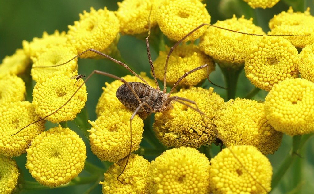 8 Legs Insects: Are There Any Insects With 8 Legs?