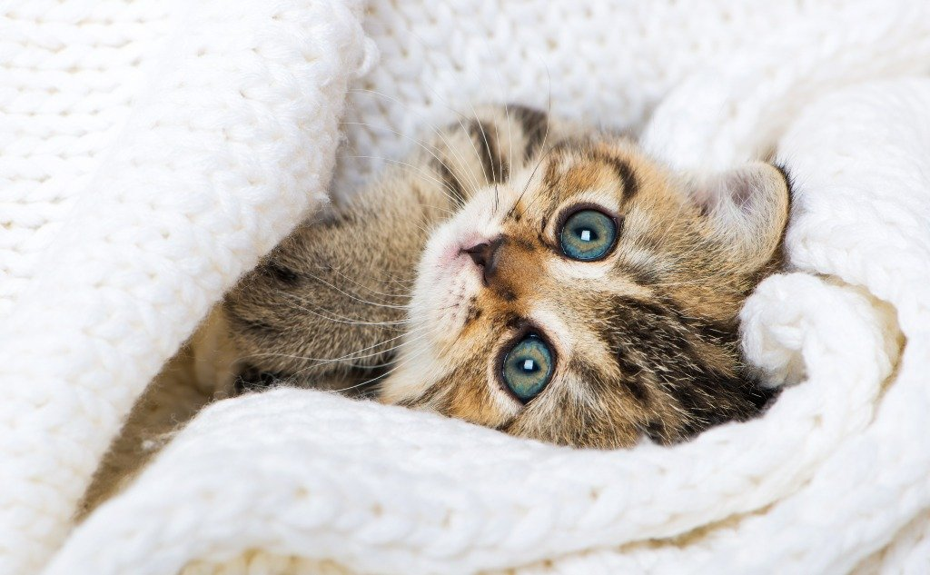 Why Does Your Cat Stare at Ceilings and Walls?