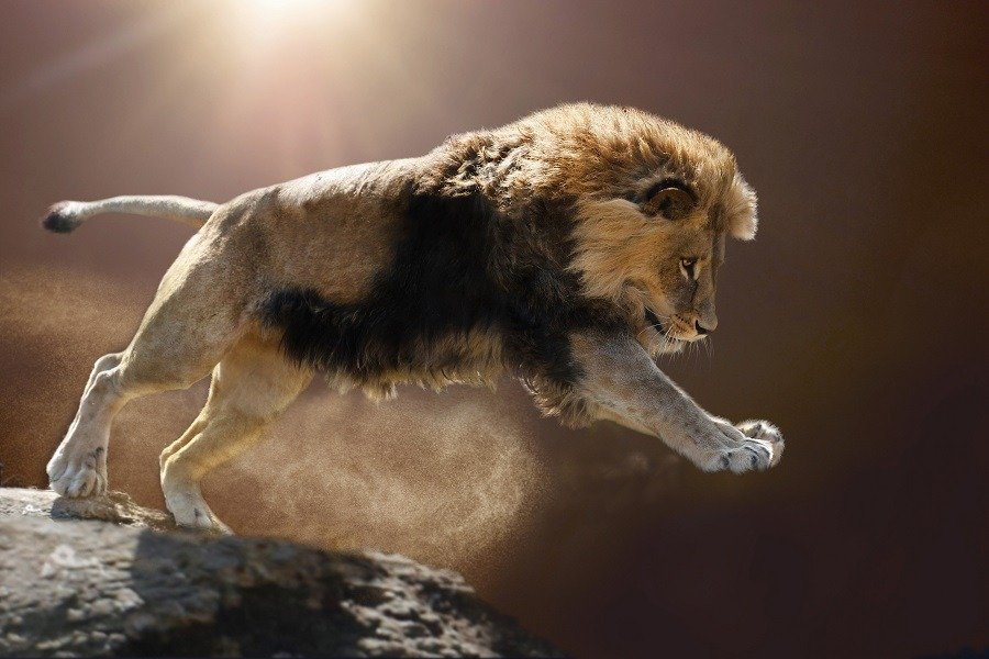 A powerful lion on attack mode jumps off the cliff.