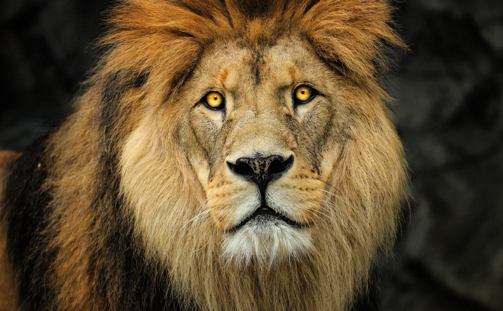 Why Shouldn't You Look Into the Eyes of a Lion?
