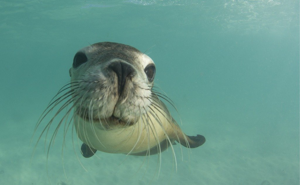 Are Sea Lions Dangerous To Humans?