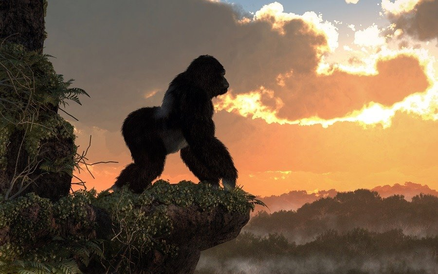 A silverback gorilla stands on a rocky, vegetation covered ledge overlooking a jungle basin.