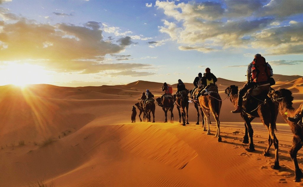 Horses vs. Camels: What Are the Differences and Their Uses?